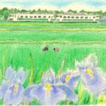 齋正機先生の新作の挿絵
